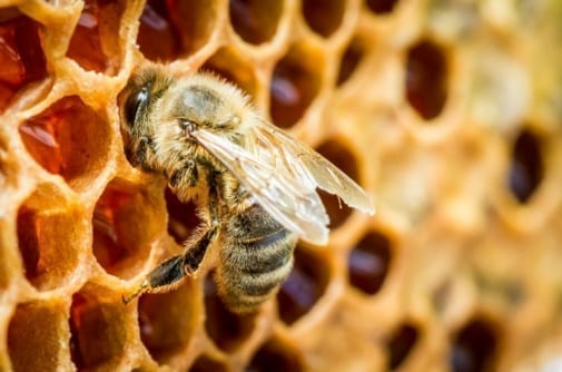 Photo of Knowledge of bee honey contents in the torah