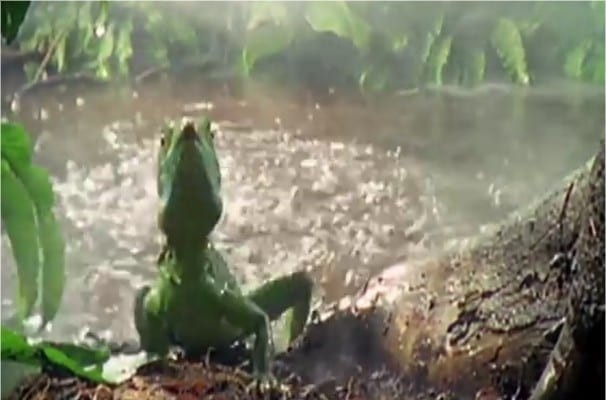 Photo of Watch: The Incomprehensible Power of  The Lizard