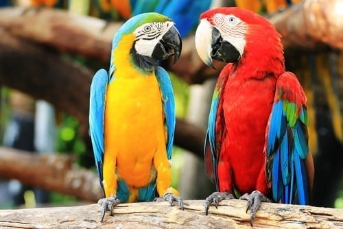 Photo of Watch: What Does the Parrot Do When He Is Hot?