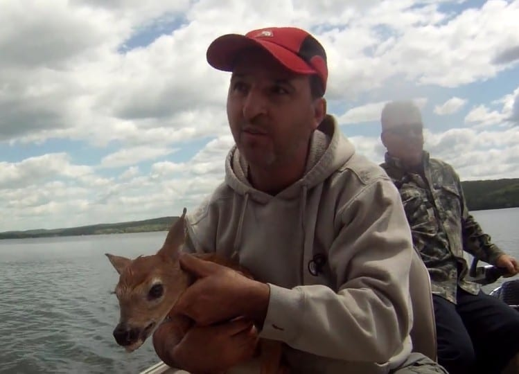 Photo of Watch: Fisherman rescue baby deer from drowning
