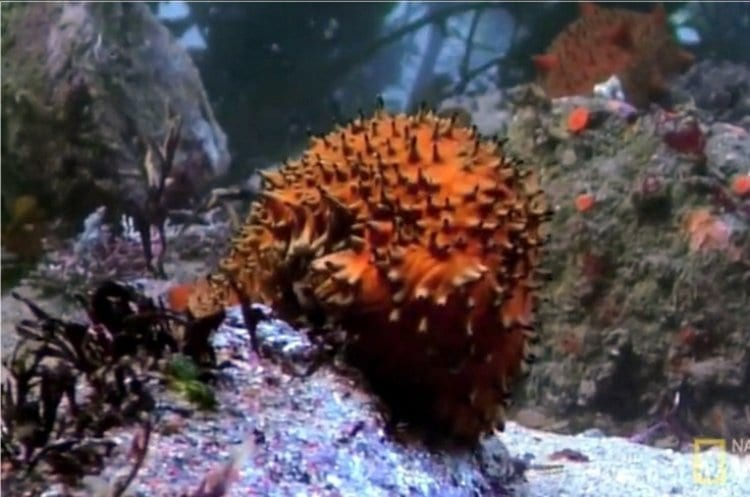 Photo of Watch: One day in the life of a sea cucumber