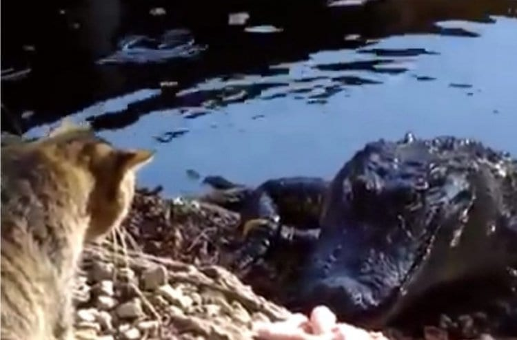 Photo of Watch: Face to Face with a Crocodile