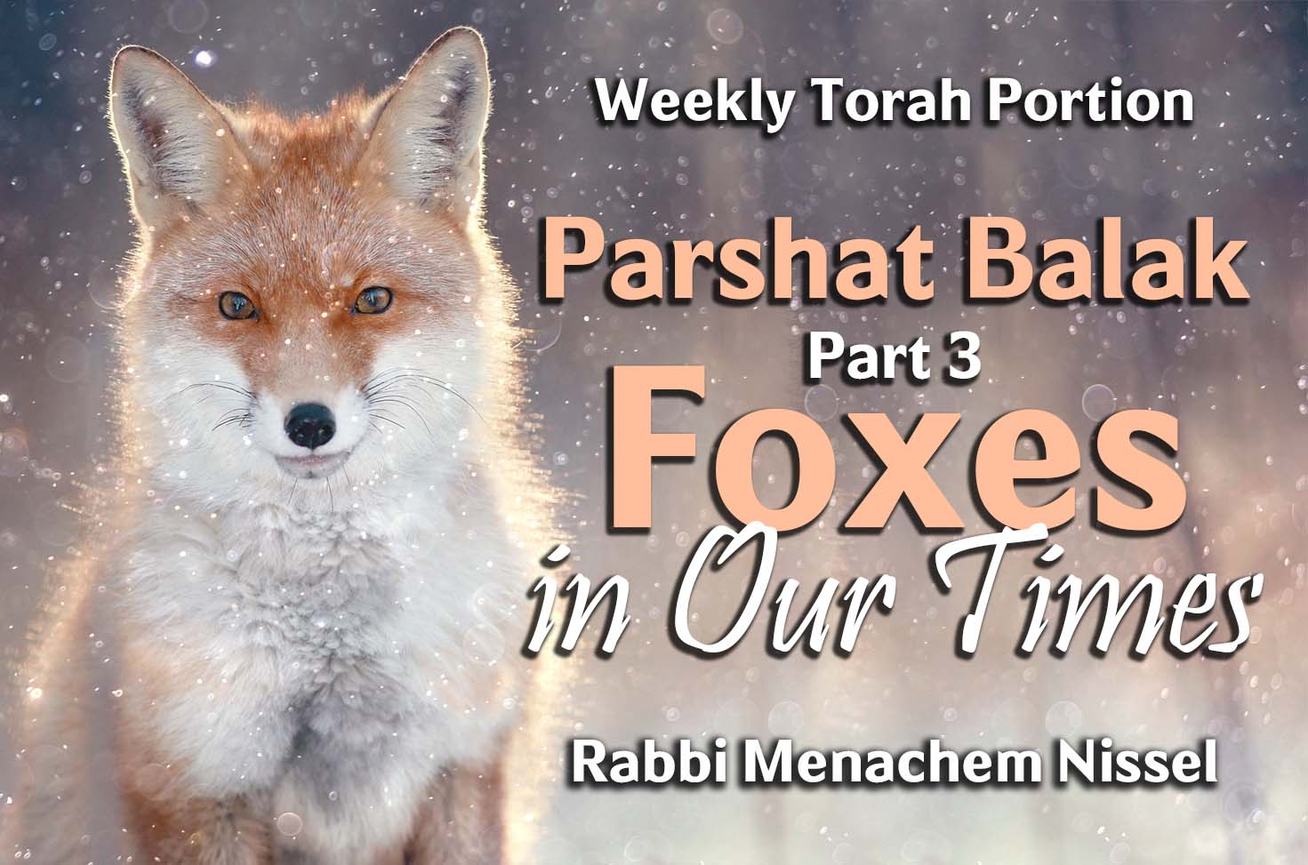 Photo of Parshat Balak – Part 3 – Foxes in Our Times