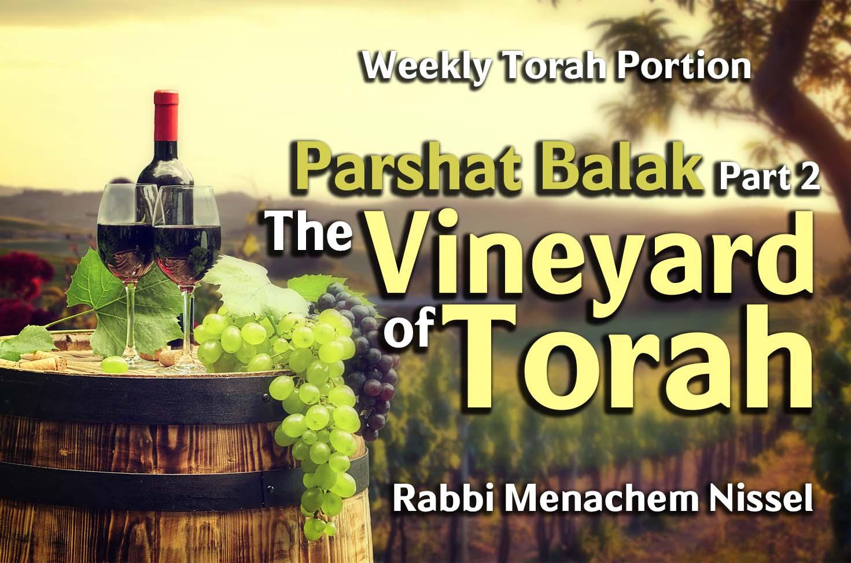 Photo of Parshat Balak – Part 2 – The Vineyard of Torah
