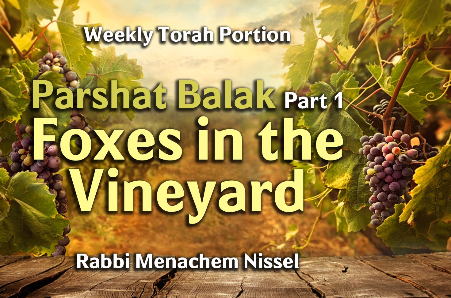 Photo of Parshat Balak – Part 1 – Foxes in the Vineyard