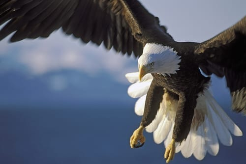Photo of Startling: An Eagle Tried to Kidnap a Baby and Then …
