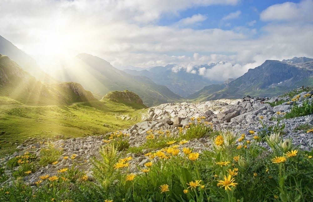Photo of A Flowering Green Mountain: The Color of Torah