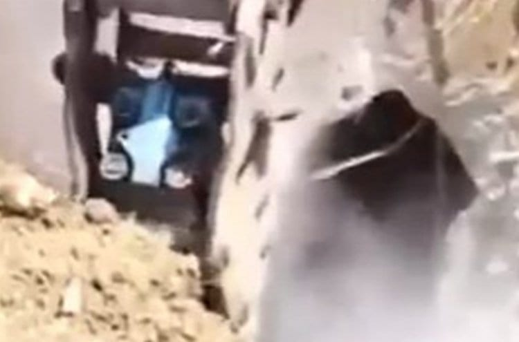 Photo of Watch: Wild Surprise Awaits Tractor Driver