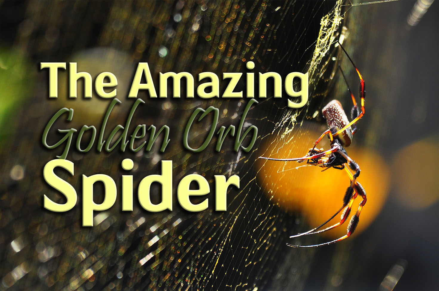 Photo of The Amazing Golden Orb Spider