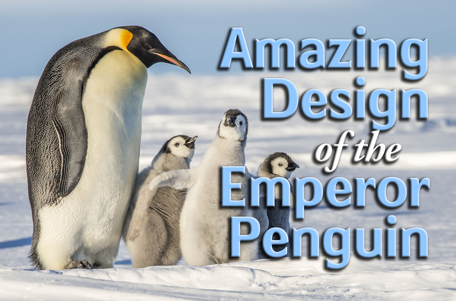 Photo of Amazing Design of the Emperor Penguin