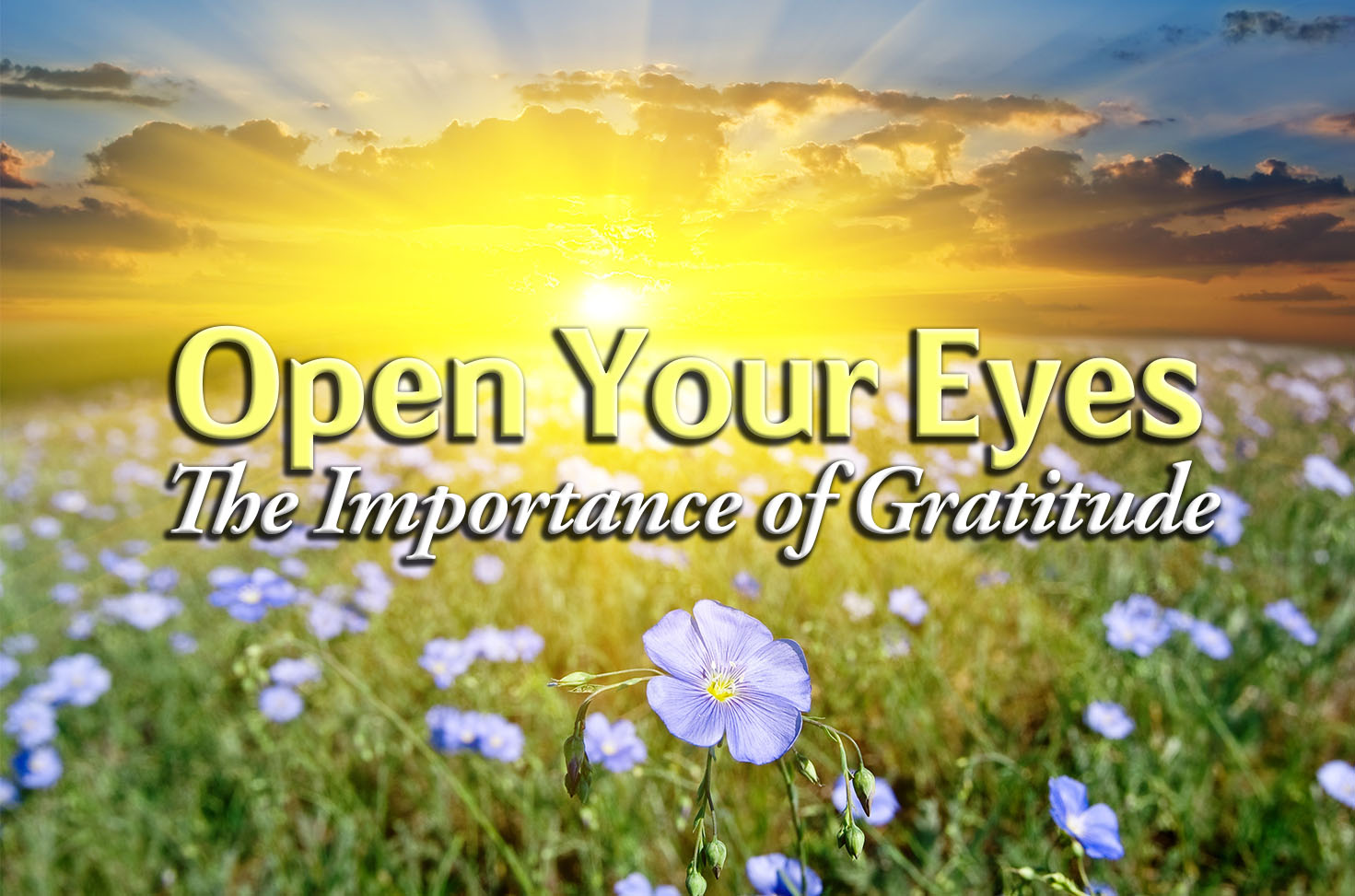 Photo of Open Your Eyes – The Importance of Gratitude