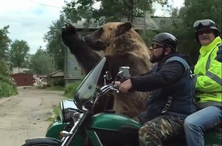 Photo of Watch: Bear Entertains People on the Streets of Russia