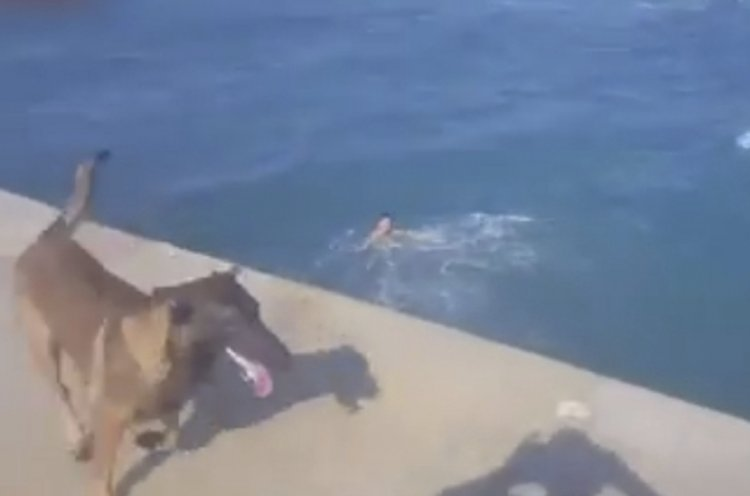Photo of Watch – How Did the Dog React to Drowning Child?