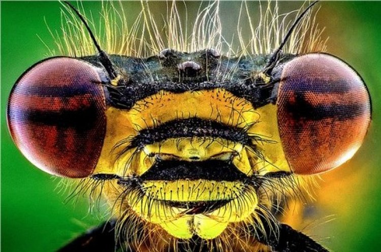 Photo of Gallery: Incredible Close-Up Images of Insects