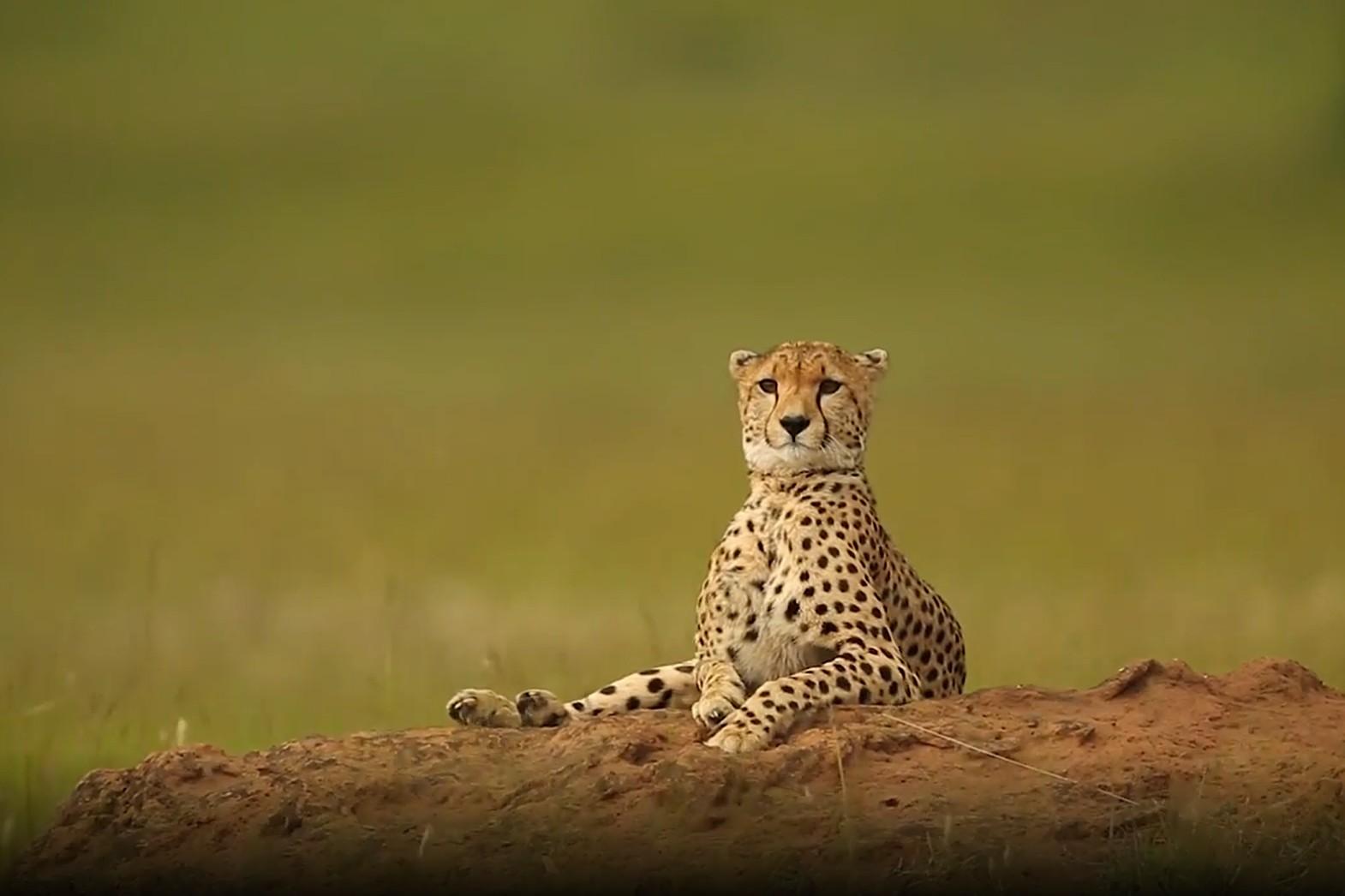 Photo of Wonders of Creation: Stunning Wildlife Footage in Kenya