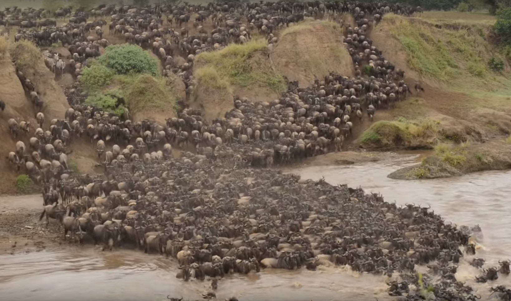 Photo of Fascinating – Watch Wildebeest Crossing the Mara River in Kenya