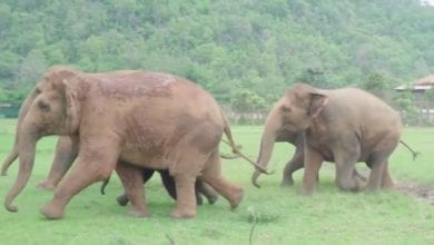 Photo of Elephants Run to Greet a Rescued Baby Elephant – Watch