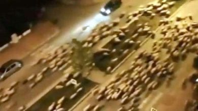 Photo of Huge Flock of Sheep Invade Turkish Streets During Corona Curfew