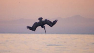 Photo of Wonders of Creation: The Pelican Dive – Absolute Perfection